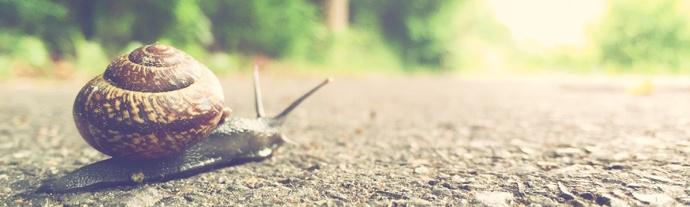 snail-slow.jpg